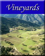 Click to view our Vineyard packages